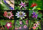Faszinierende Blüten