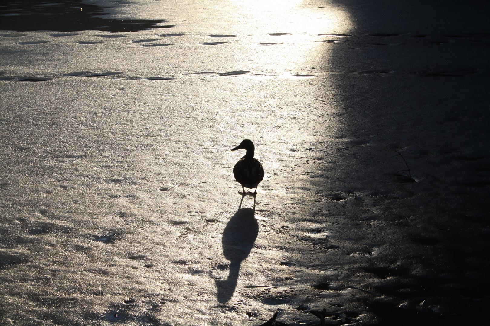 Faszinierende Schatten