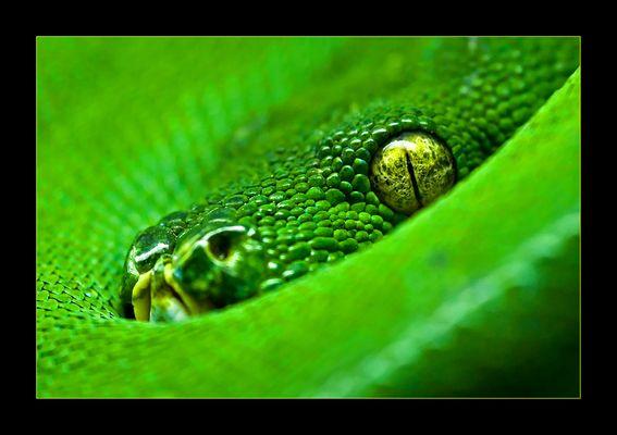 faszinierendes Grün