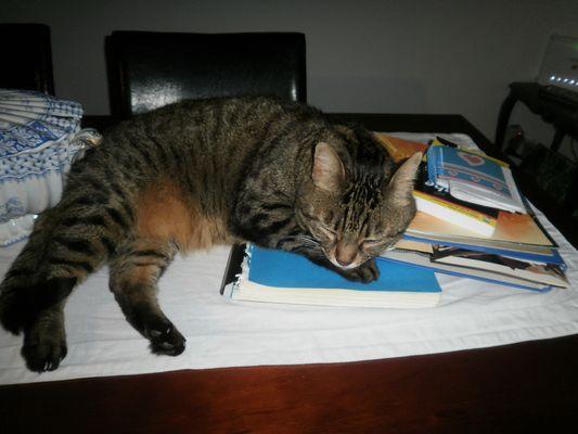 fatigué par l'étude