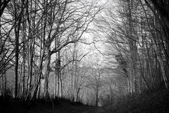 Fau Timon en noir & blanc