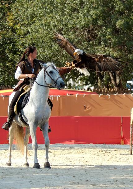 fauconnerie equestre