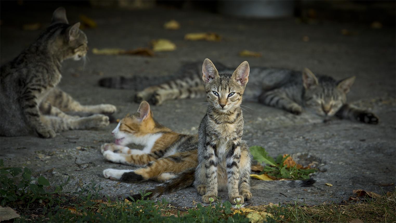Faule Katzenbande