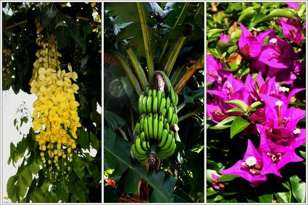 Fauna auf Mauritius