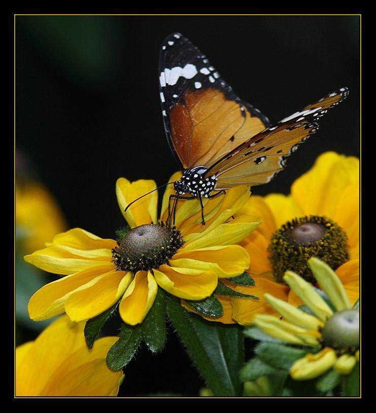 Fauna meet flora