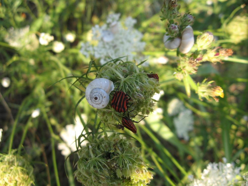 faune et flore sauvage