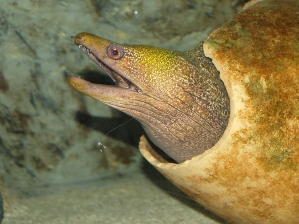 Faune sous-marine