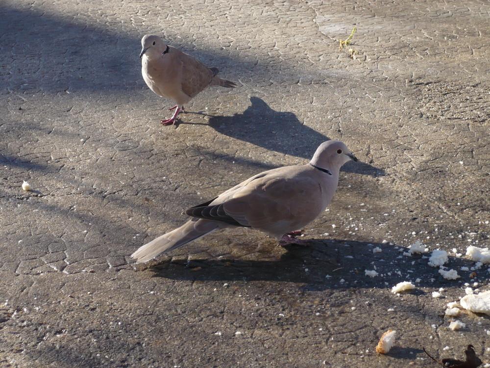 Faut pas nous prendre pour des pigeons !