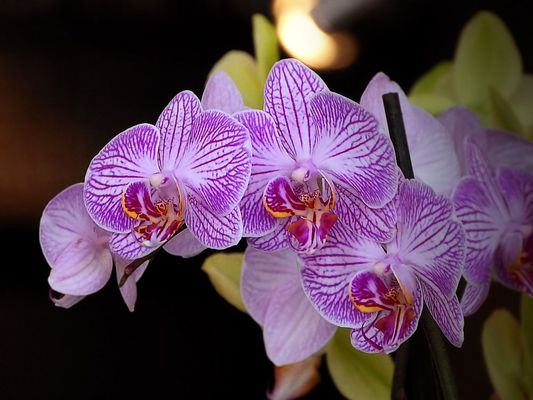 Favorite orchid