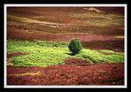 FB 165 Black Burn Valley # 02