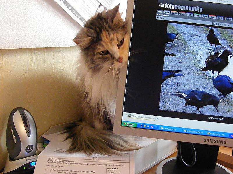 fc für die Katze