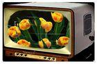 FC - meine TV Alternative