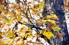 letzte zarte Blätter von SINA