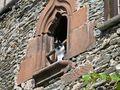 FR: Le chat de la maison..... von PERSYN Thérèse