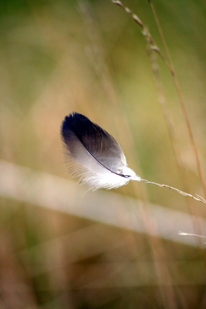"""Feather on Gras"""
