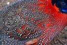 COM: Feathers II von Antonio Amen