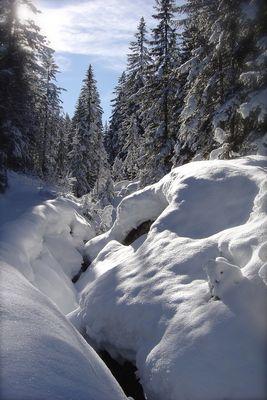 Februar 2008 in Tyrol