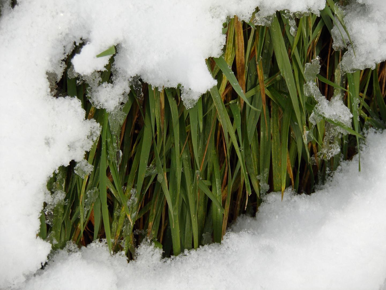 Februarschnee