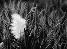 Feder im Gras
