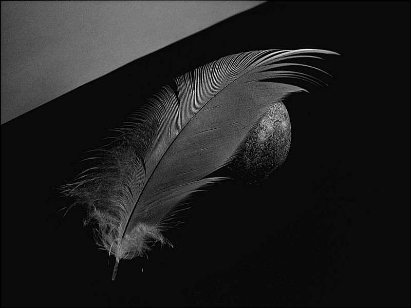 Feder,  natürliches Kunstwerk (Vogelart ??)