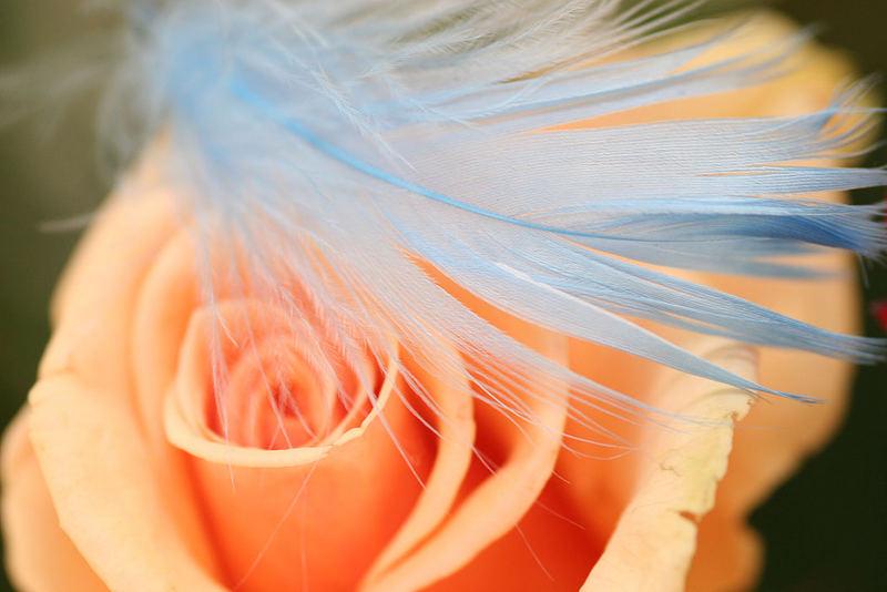 Federleichte Blüte