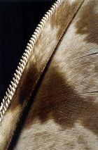 Federsaum einer Schleiereulen-Feder