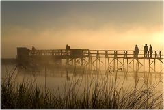 Federsee-----Morgenimpression