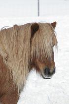 Fee im Schnee