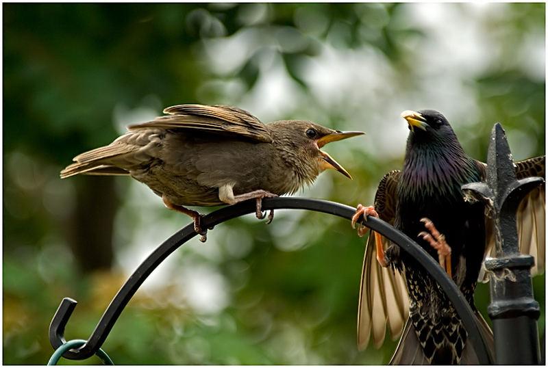 Feed Me!!!