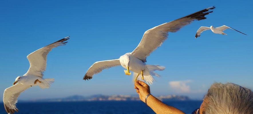 Feeding seagulls