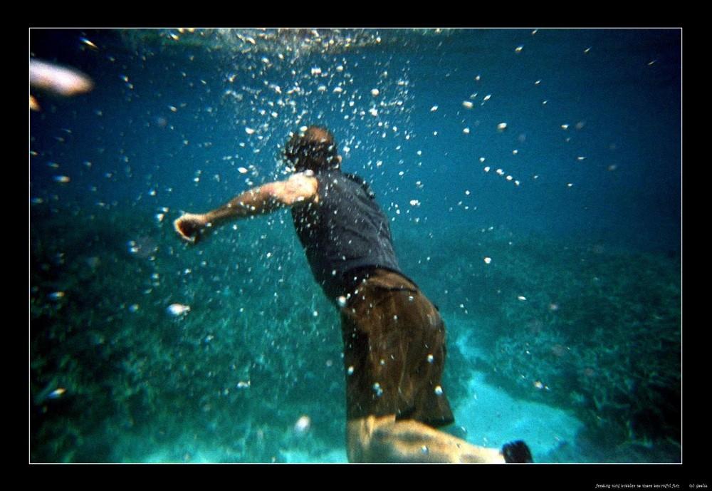 feeding tiny bubbles to those beautiful fish