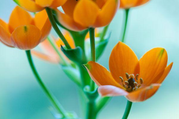 * feel orange *