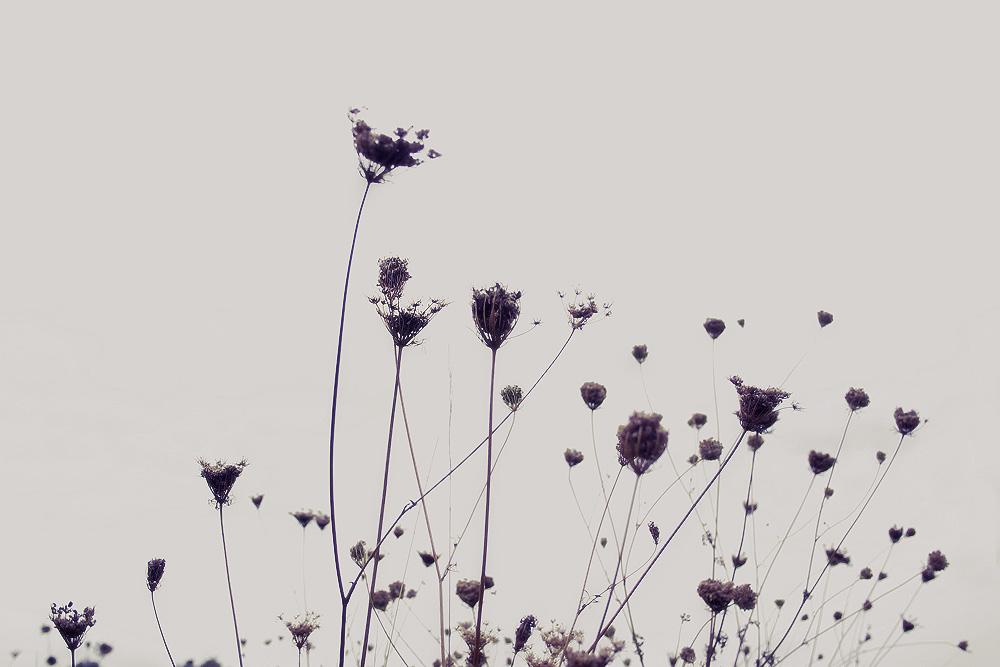 feel the autumn