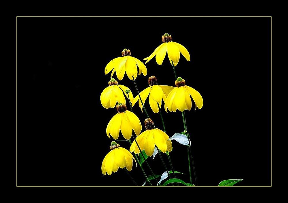 feel yellow