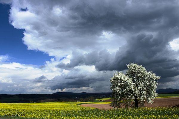 * Feelings of Spring *