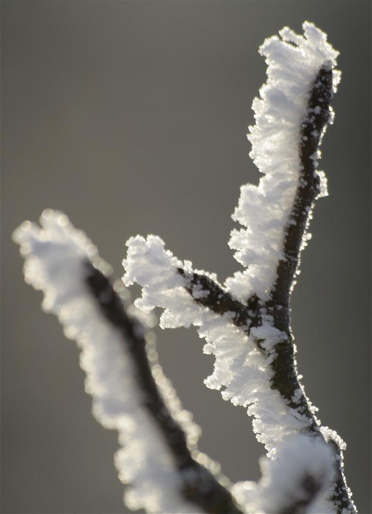 féérie de l'hiver bis