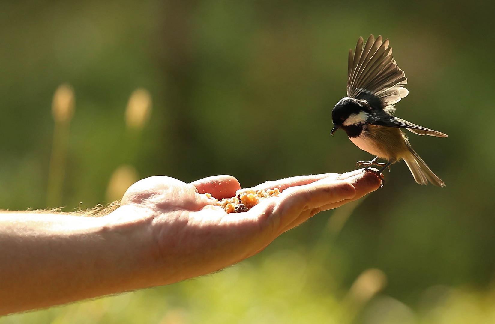 Feet the Bird