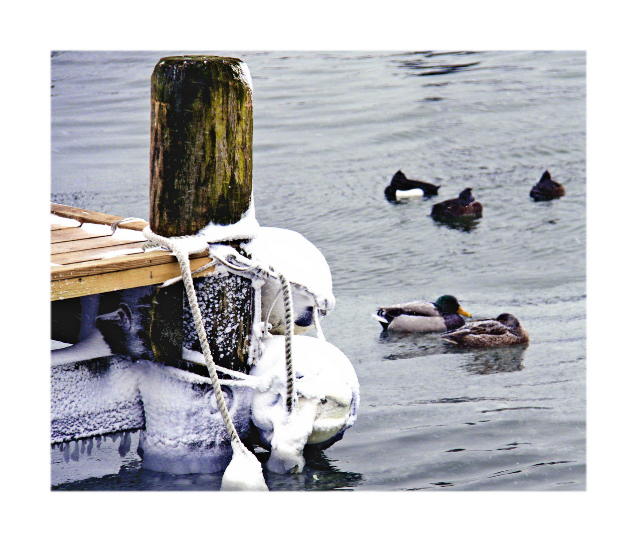 Fehmarn Hafen Orth im Winter