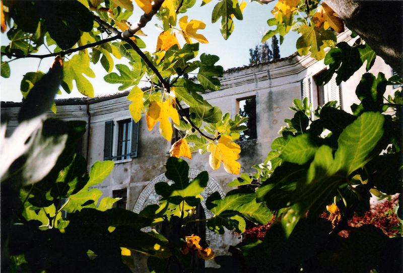 Feigenbaum am alten Café im Herbst
