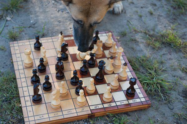 feine bande spielt Schach