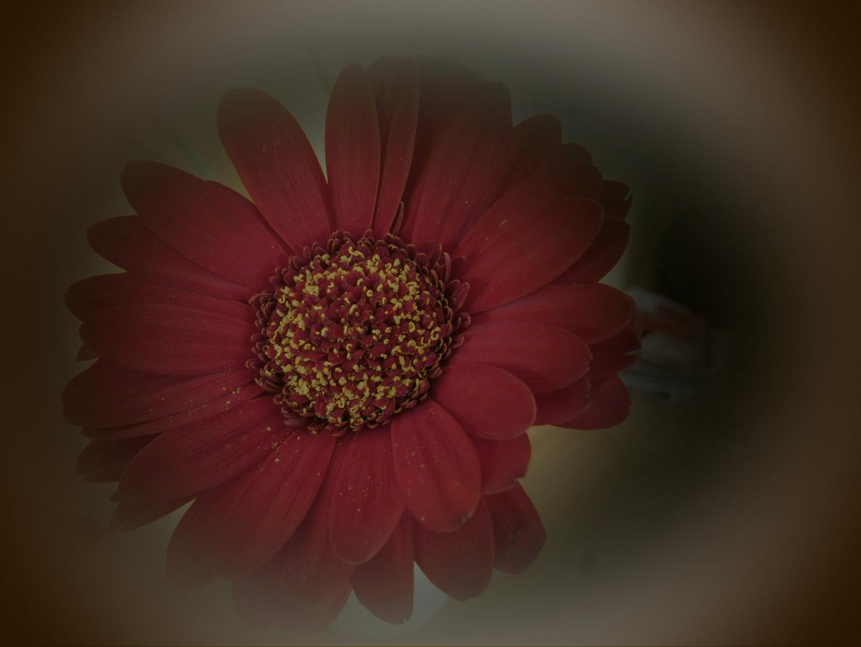 feiner Blütenstaub...