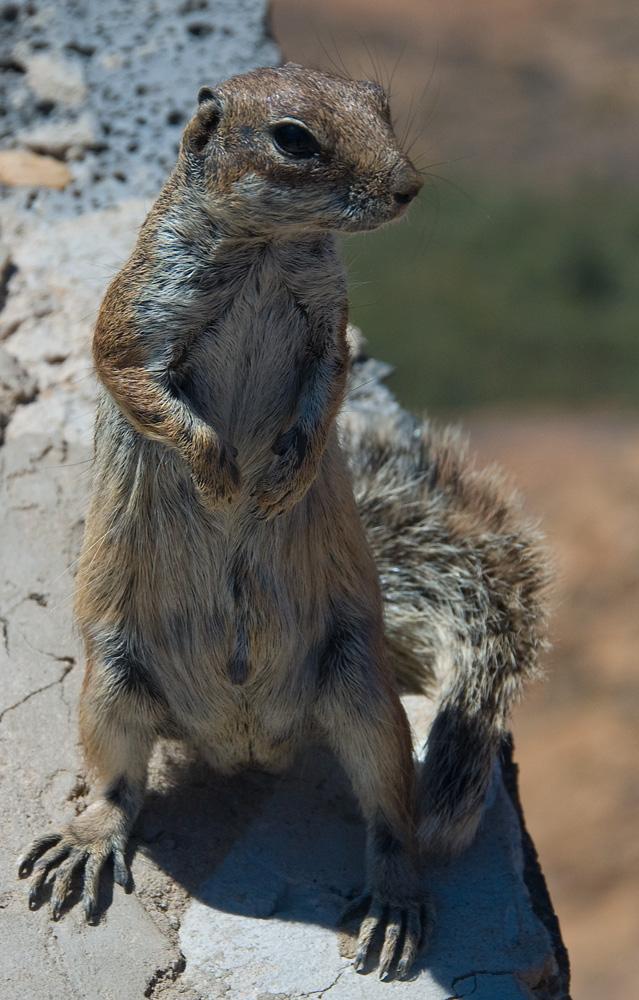 Feinschmeckerhörnchen