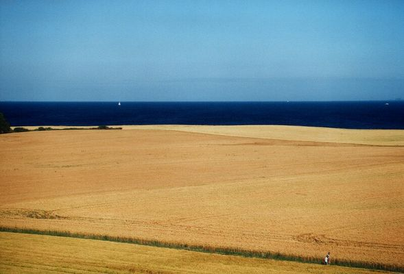 Feld am Meer