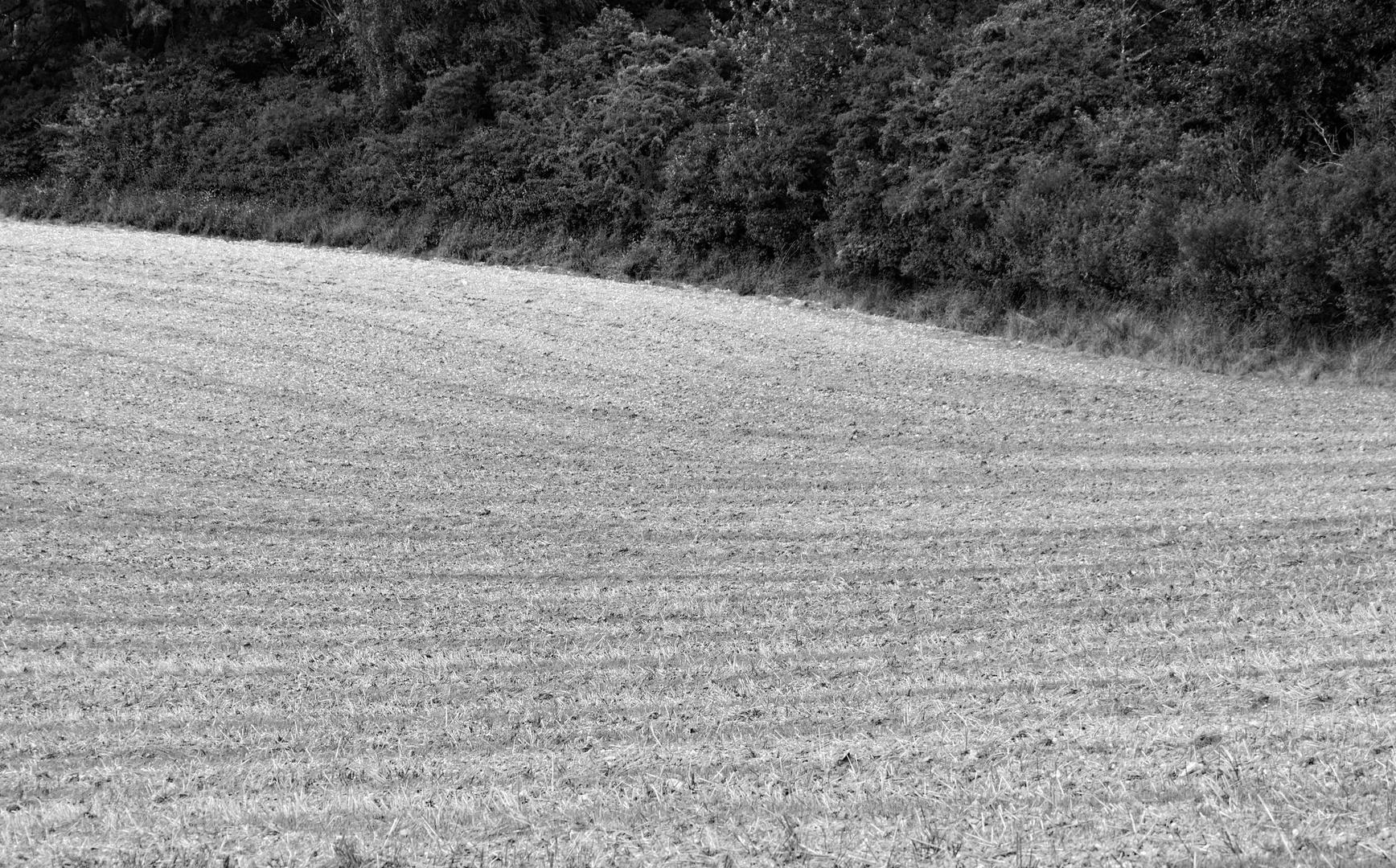 Feld auf Schwung
