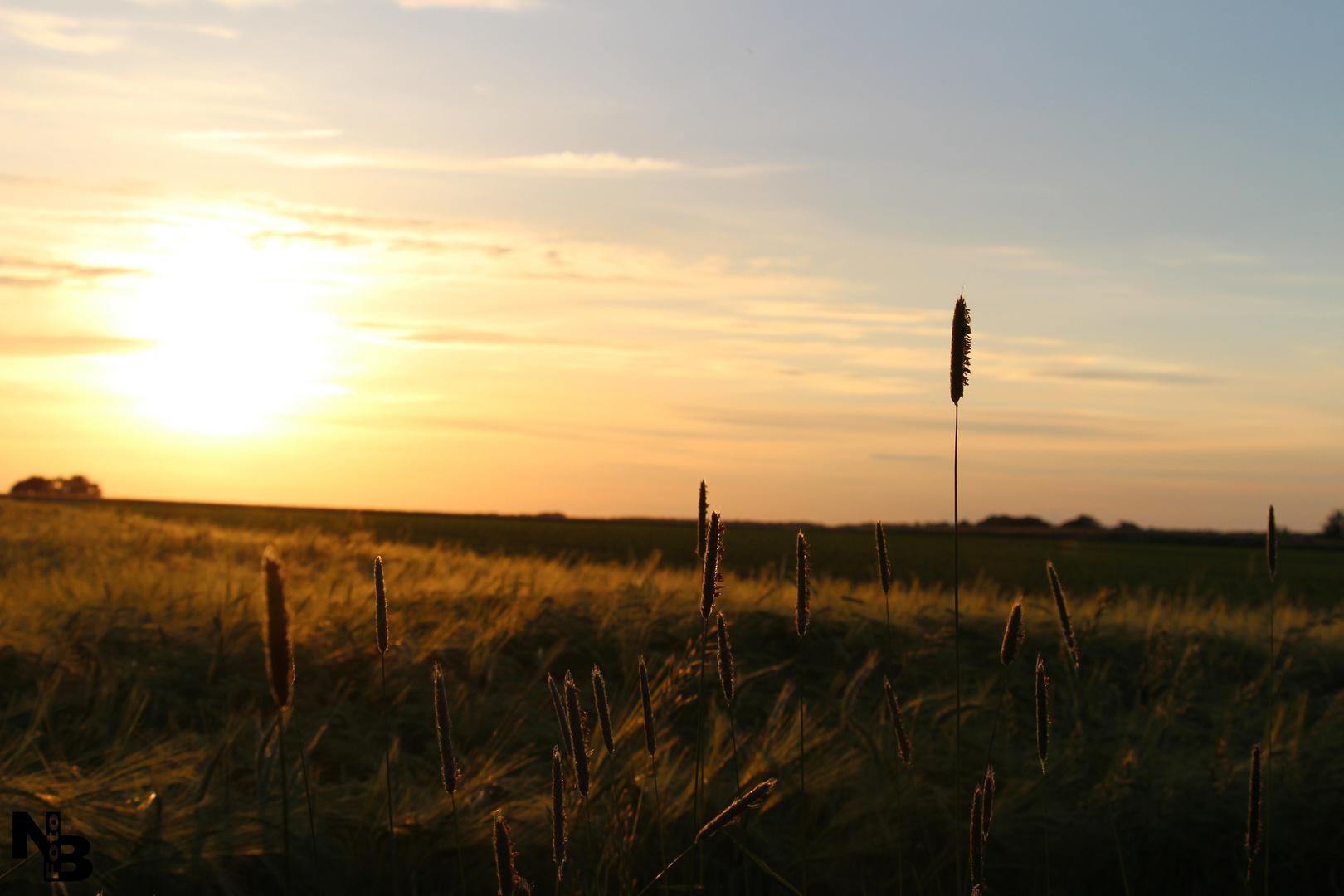 Feld bei Sonnenuntergang