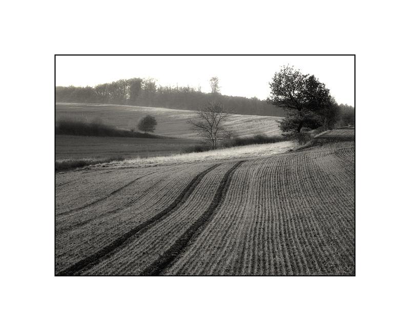 Feld im Gegenlicht