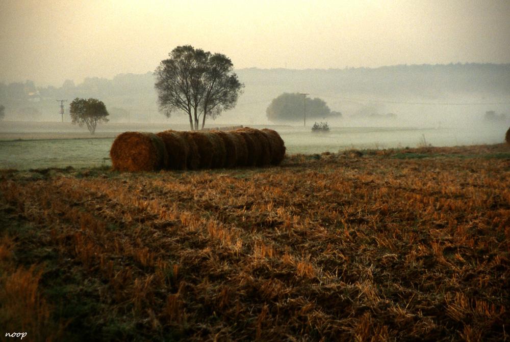 Feld im Herbstnebel