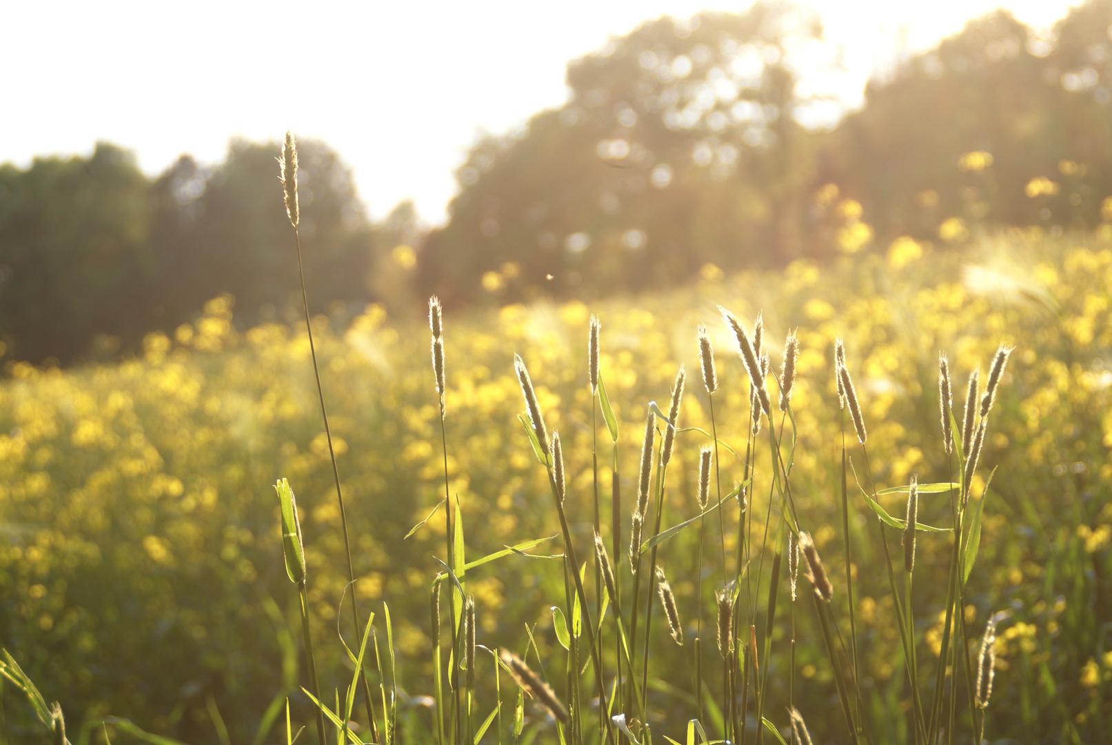 Feld im Sommer