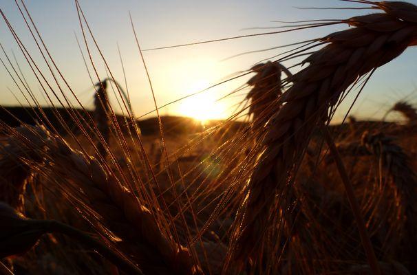 Feld im Sonnenaufgang