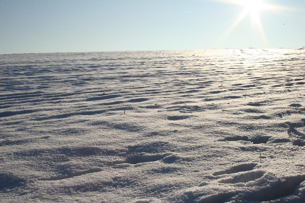 Feld im Winter in Brandenburg